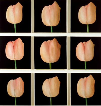9 tulips by patrice moor
